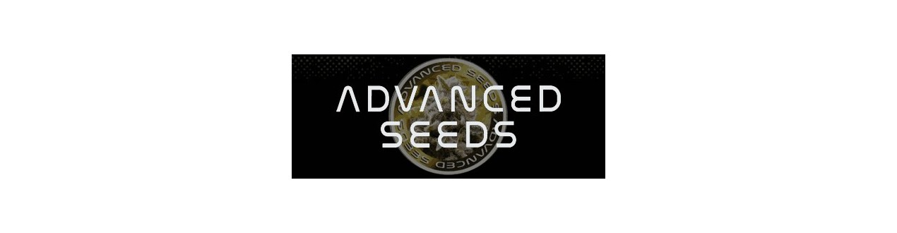Advanced Seeds Semillas Autoflorecientes - Sinsemilla Street.