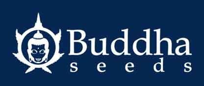 Budhha Seeds